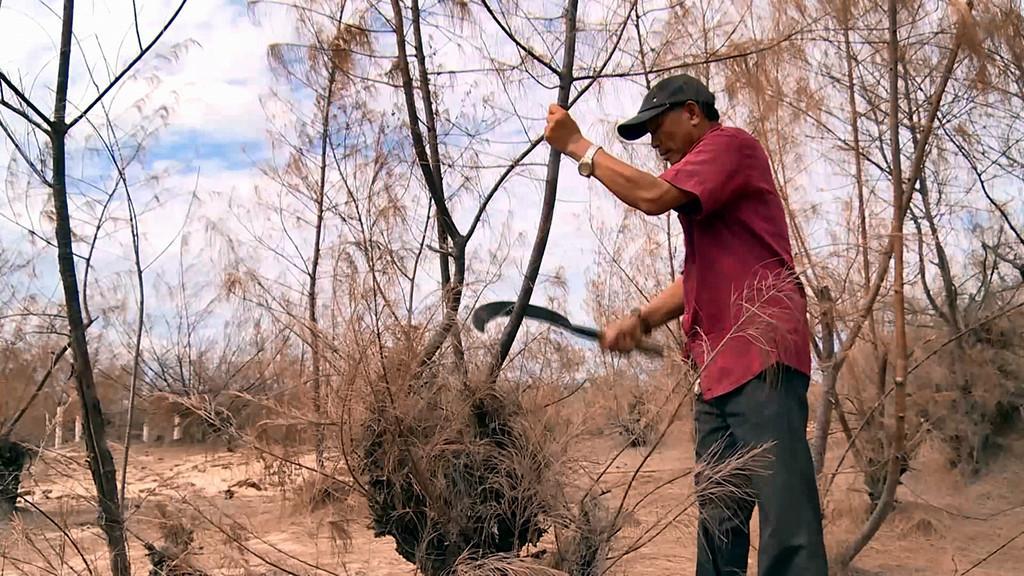 Hơn 189 ha rừng phòng hộ chống biến đổi khí hậu bị chết do nắng hạn Ảnh 1