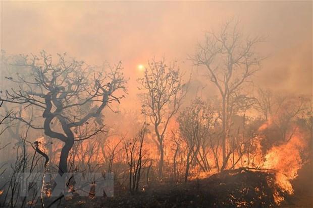 Tổng thống Brazil: Cháy rừng Amazon là 'vấn đề nội bộ' của khu vực Ảnh 1