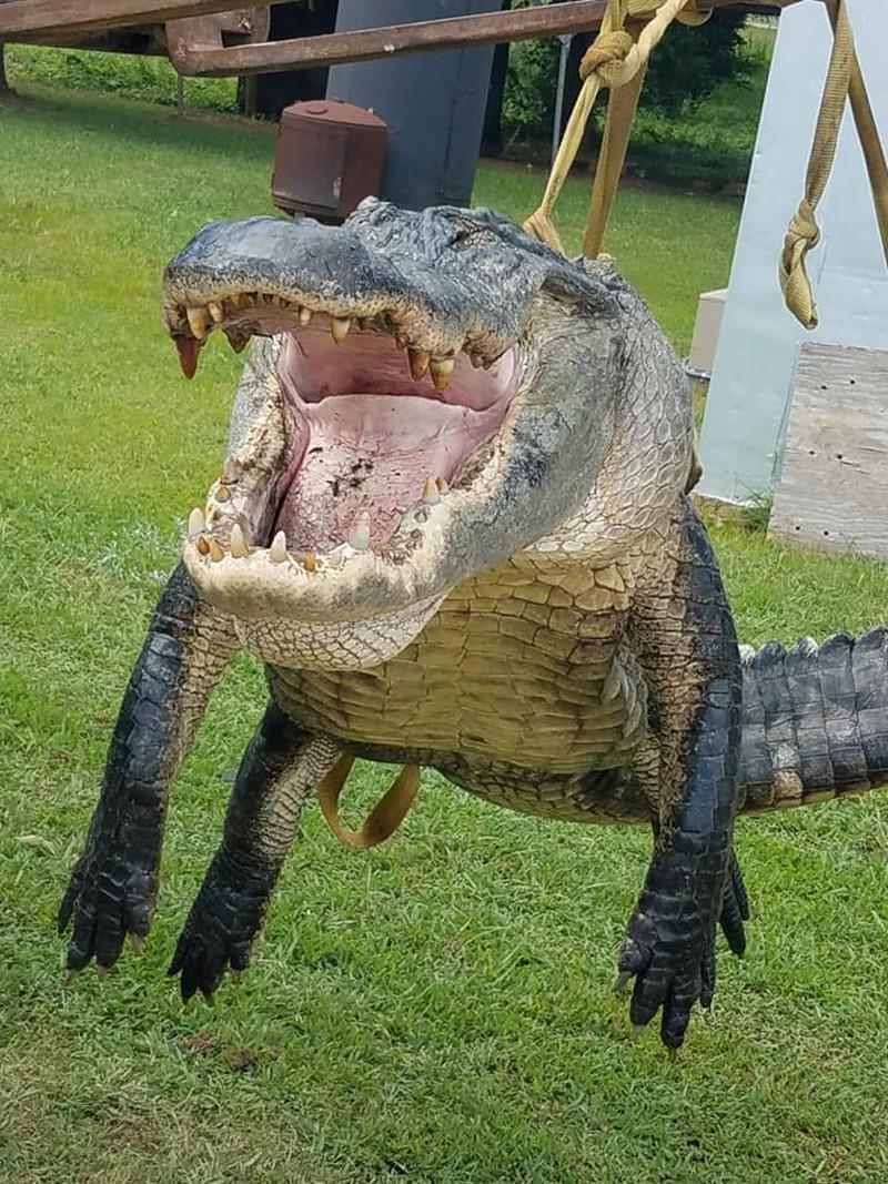 Choáng váng săn 'siêu cá sấu' nặng 317kg, phá kỷ lục Ảnh 2