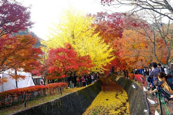 Du lịch Nhật Bản vào mùa thu, bạn đừng quên trải nghiệm những lễ hội hấp dẫn này Ảnh 5