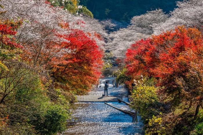 Du lịch Nhật Bản vào mùa thu, bạn đừng quên trải nghiệm những lễ hội hấp dẫn này Ảnh 1