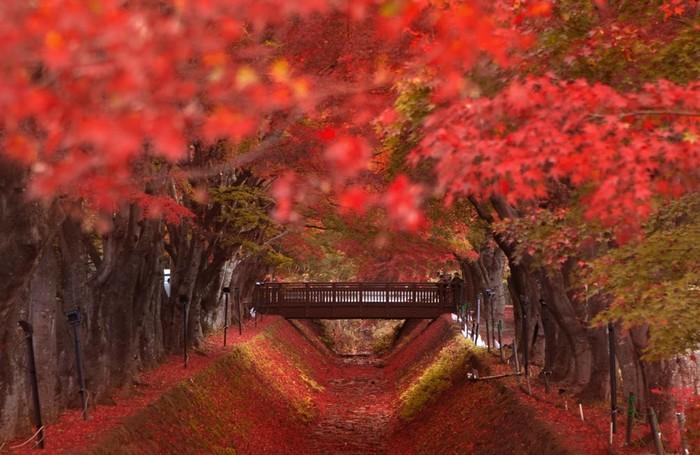 Du lịch Nhật Bản vào mùa thu, bạn đừng quên trải nghiệm những lễ hội hấp dẫn này Ảnh 4