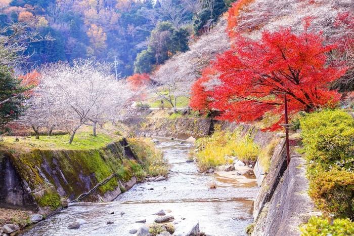 Du lịch Nhật Bản vào mùa thu, bạn đừng quên trải nghiệm những lễ hội hấp dẫn này Ảnh 3