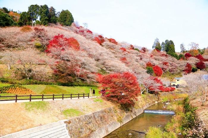 Du lịch Nhật Bản vào mùa thu, bạn đừng quên trải nghiệm những lễ hội hấp dẫn này Ảnh 2