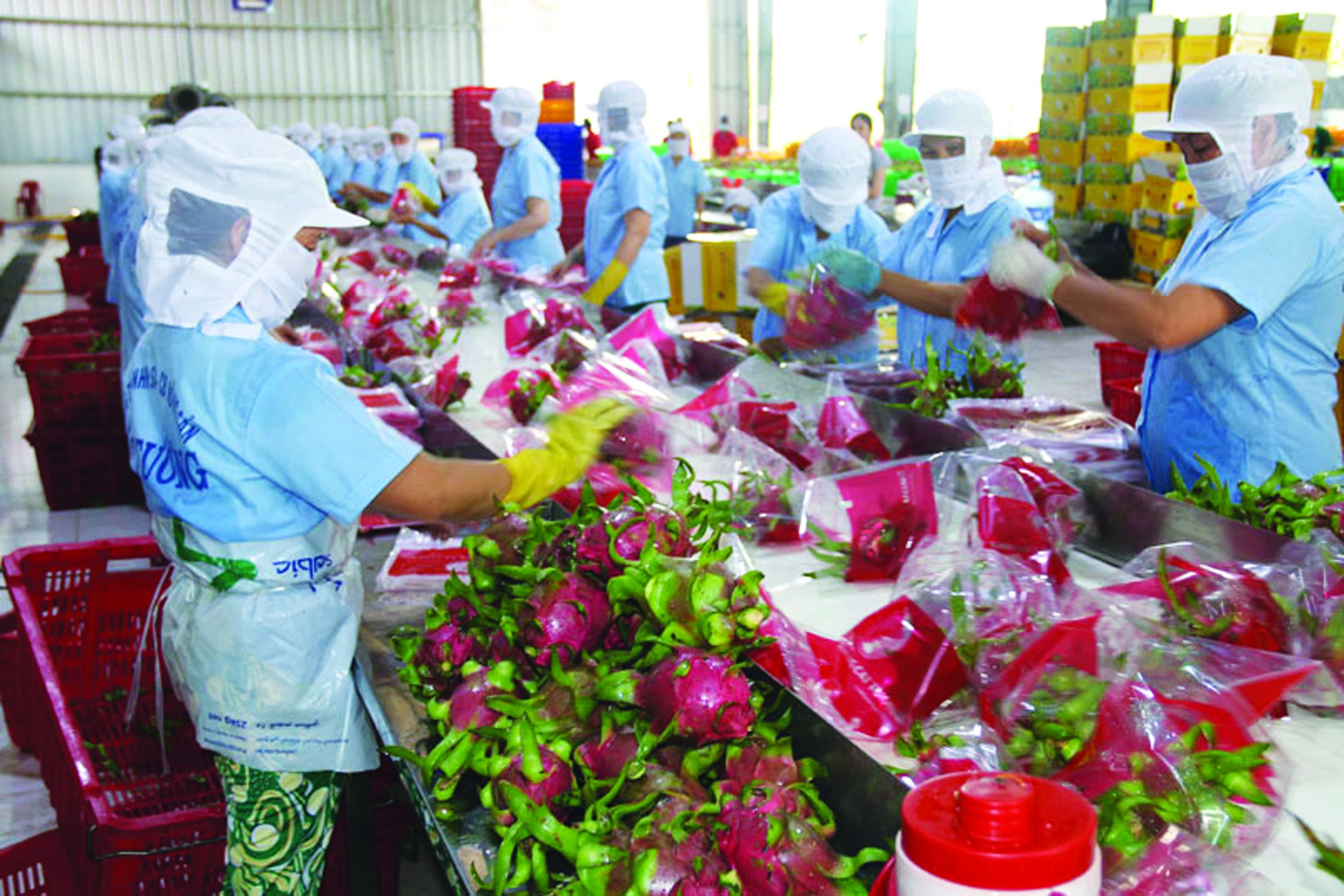 Thương mại nông sản Việt Nam - Trung Quốc nhìn từ con số thống kê: Thực tiễn, vấn đề và giải pháp Ảnh 1
