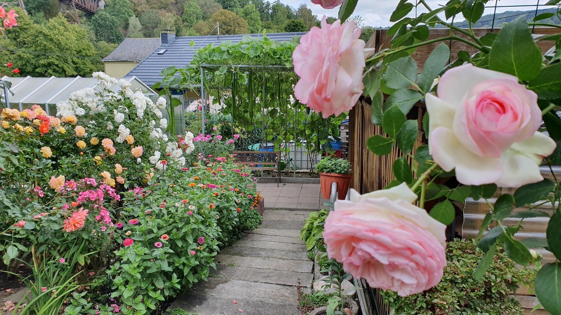 Khu vườn 1000m2 đầy hoa thơm trái ngọt của cặp vợ chồng người Việt ở Đức Ảnh 1