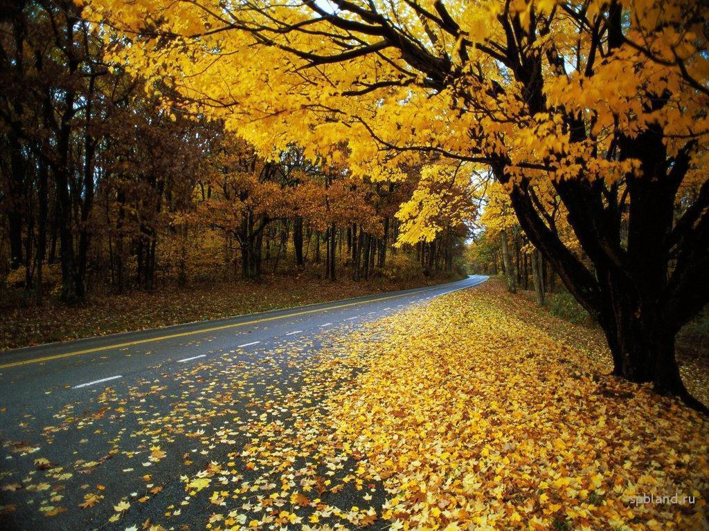 Chuyện chiều thứ 6: Có phải mùa thu giấu ta lâu đến thế… Ảnh 3