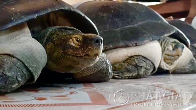Ngôi Chùa Có Loài Sen Cõng Được Người Và Cụ Rùa Hơn 100 Tuổi 'Ăn Chay' Ảnh 6
