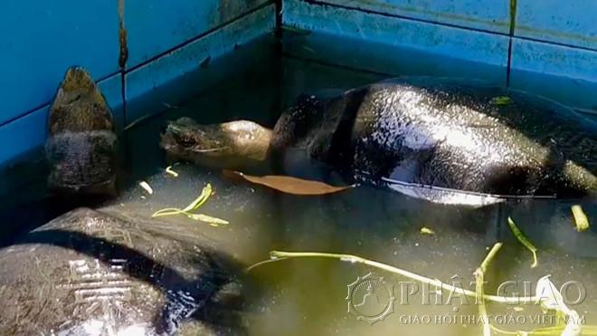 Ngôi Chùa Có Loài Sen Cõng Được Người Và Cụ Rùa Hơn 100 Tuổi 'Ăn Chay' Ảnh 7