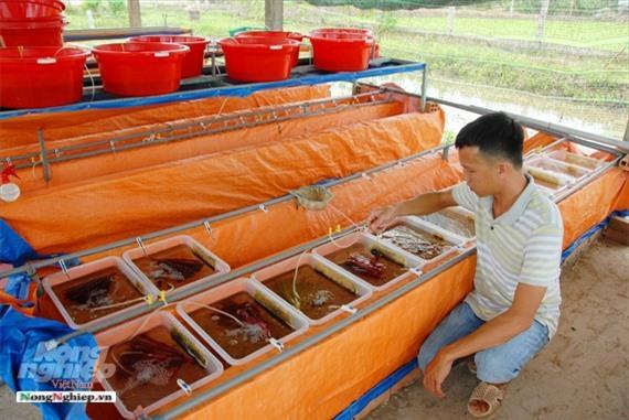 Cần Thơ: Ăn nên làm ra nhờ nuôi lươn không bùn Ảnh 6
