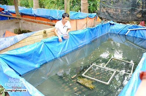 Cần Thơ: Ăn nên làm ra nhờ nuôi lươn không bùn Ảnh 1