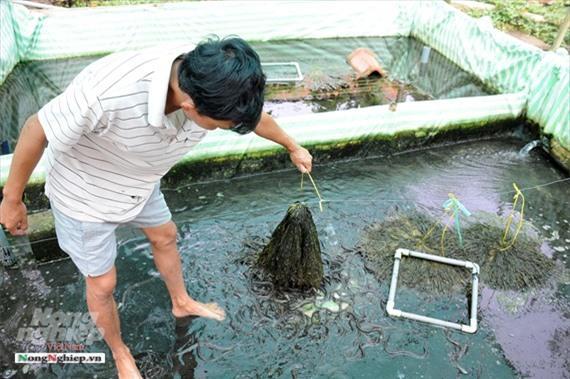 Cần Thơ: Ăn nên làm ra nhờ nuôi lươn không bùn Ảnh 11