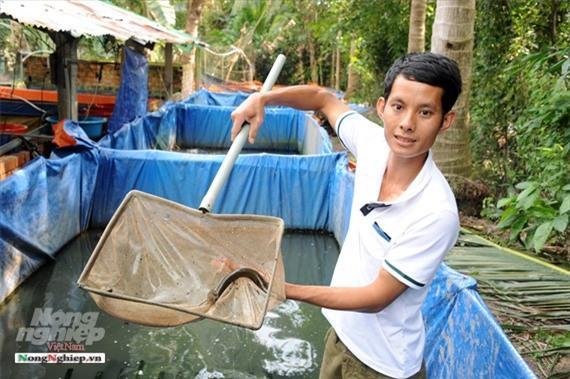 Cần Thơ: Ăn nên làm ra nhờ nuôi lươn không bùn Ảnh 2