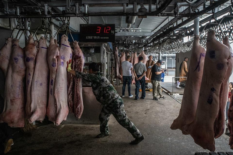 Khám phá kho dự trữ thịt lợn chiến lược của Trung Quốc Ảnh 1