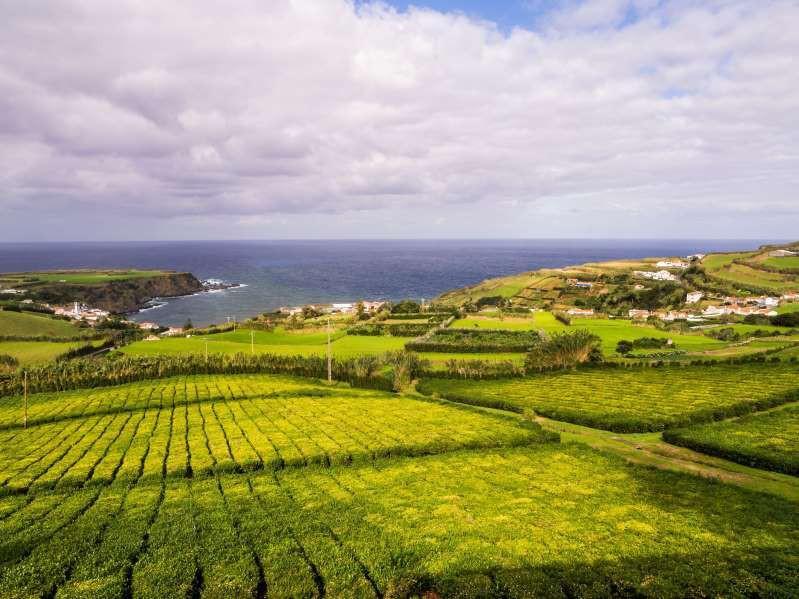 Việt Nam lọt top 15 quốc gia sở hữu nông trường chè đẹp ngất ngây Ảnh 4