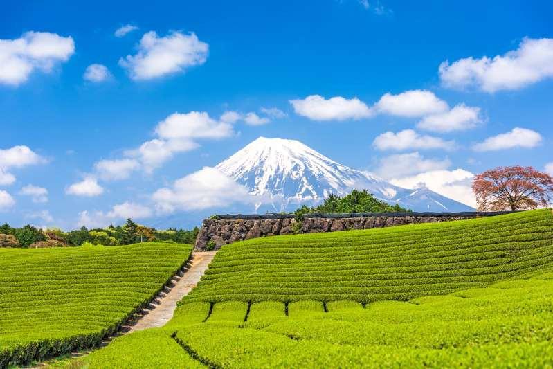 Việt Nam lọt top 15 quốc gia sở hữu nông trường chè đẹp ngất ngây Ảnh 10