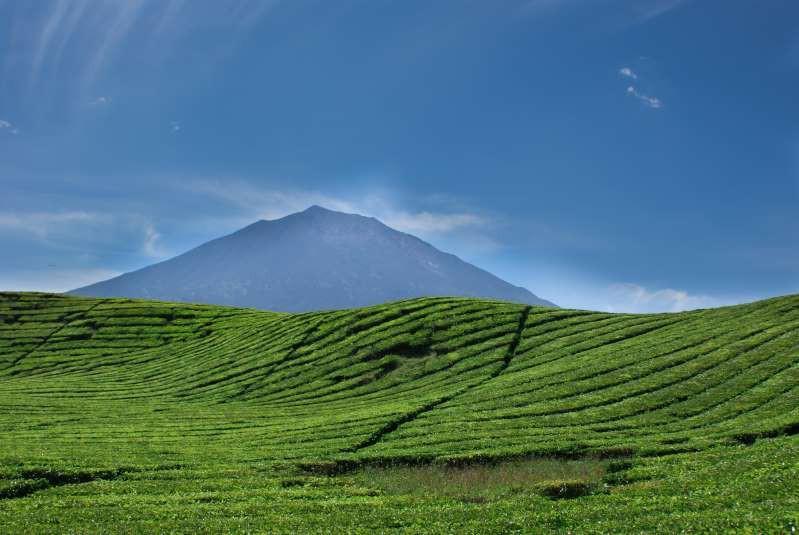 Việt Nam lọt top 15 quốc gia sở hữu nông trường chè đẹp ngất ngây Ảnh 6