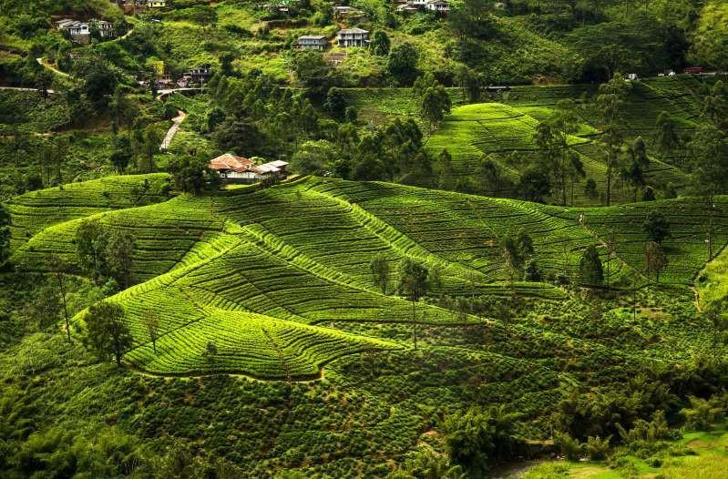 Việt Nam lọt top 15 quốc gia sở hữu nông trường chè đẹp ngất ngây Ảnh 12