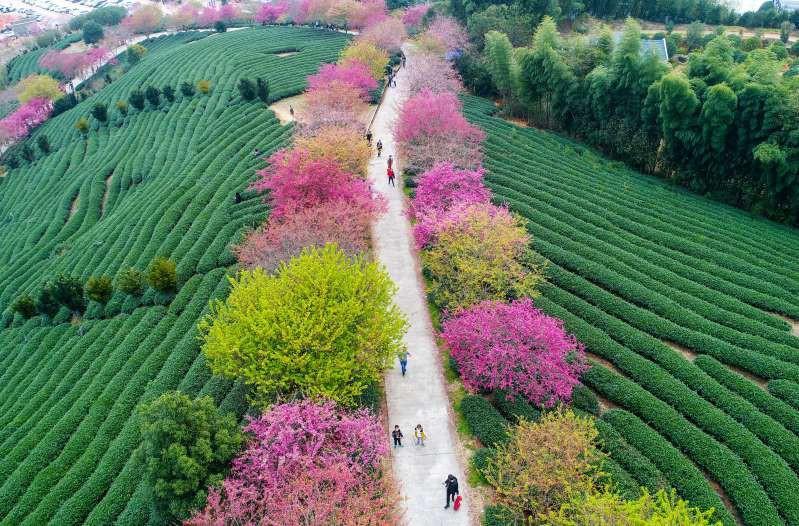 Việt Nam lọt top 15 quốc gia sở hữu nông trường chè đẹp ngất ngây Ảnh 15