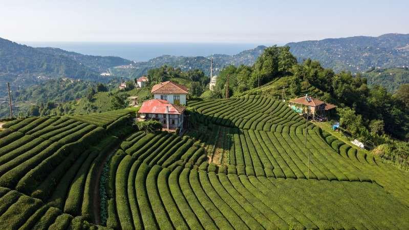 Việt Nam lọt top 15 quốc gia sở hữu nông trường chè đẹp ngất ngây Ảnh 14