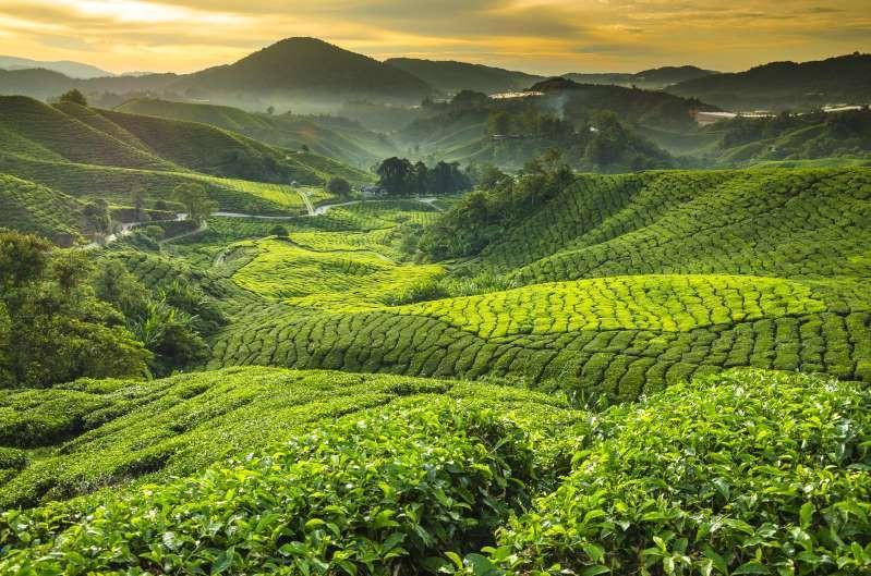 Việt Nam lọt top 15 quốc gia sở hữu nông trường chè đẹp ngất ngây Ảnh 8