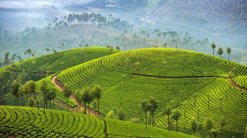 Việt Nam lọt top 15 quốc gia sở hữu nông trường chè đẹp ngất ngây Ảnh 1