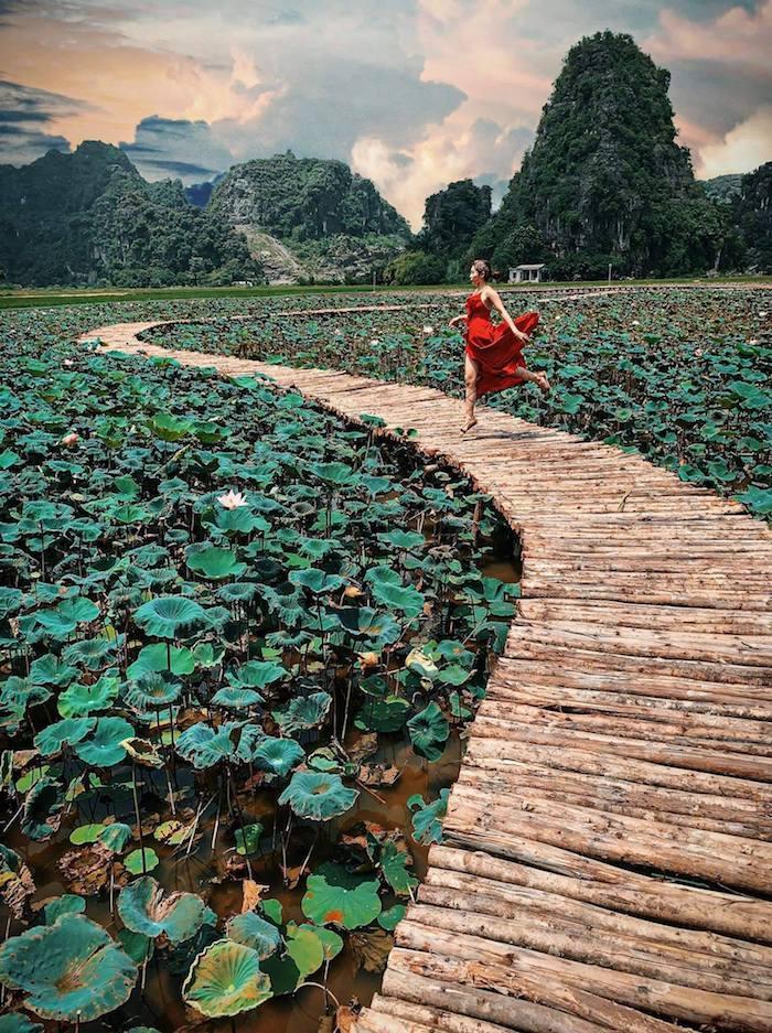 Sen nở rộ, lúa trải vàng ở 'thánh địa check-in' đẹp nhất Ninh Bình Ảnh 7