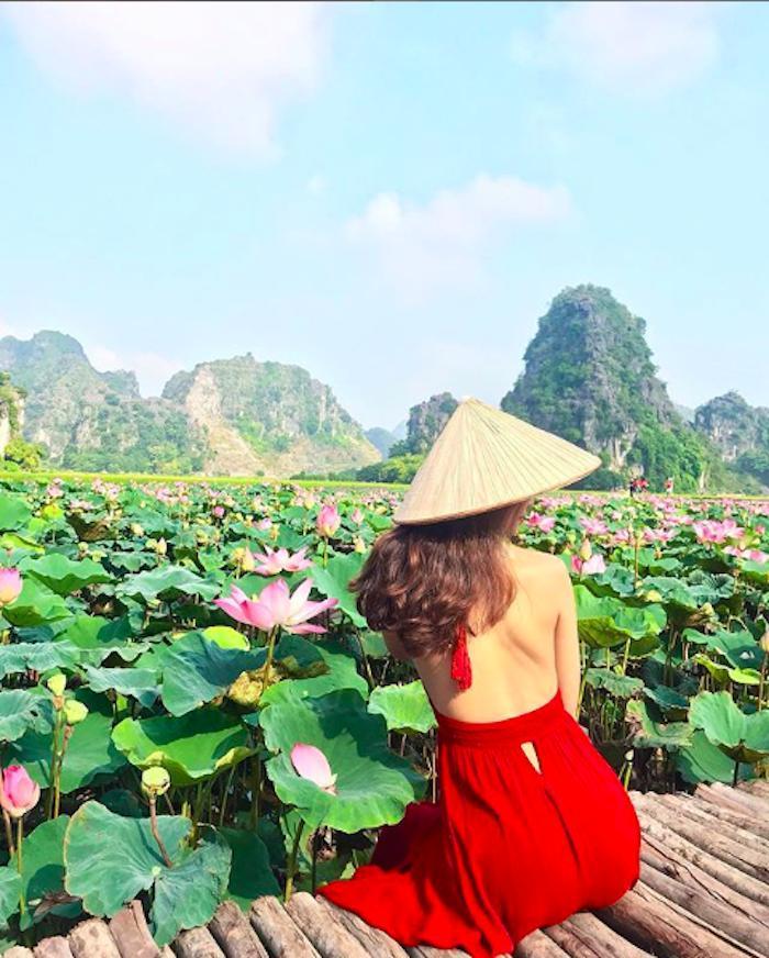 Sen nở rộ, lúa trải vàng ở 'thánh địa check-in' đẹp nhất Ninh Bình Ảnh 5