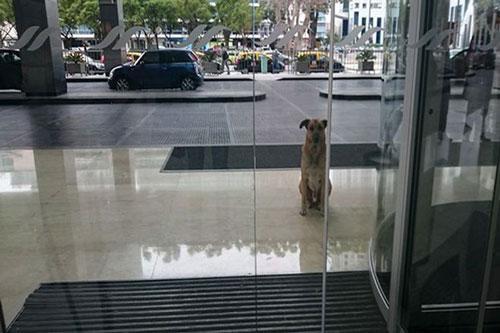 Chuyện xúc động về lòng trung thành của các chú chó Ảnh 1