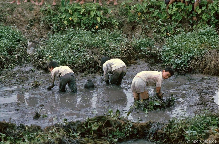 Tam Cốc - Bích Động (Ninh Bình) đẹp giản dị ở những năm 90 Ảnh 7