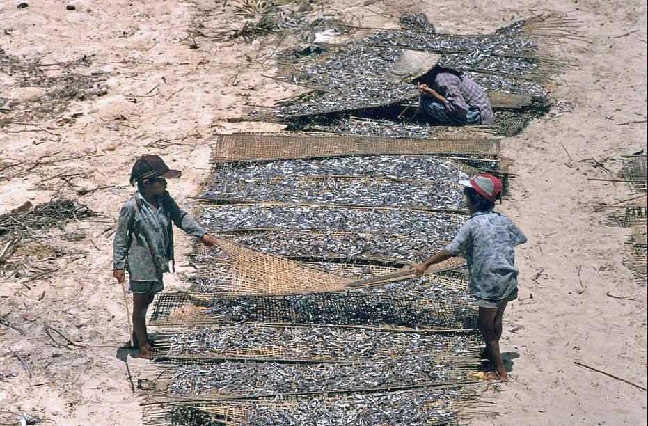 Chùm ảnh màu 'cực độc' về xứ 'hoa vàng cỏ xanh' Phú Yên đẹp lạ lùng thập niên 90 Ảnh 7