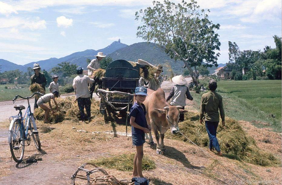 Chùm ảnh màu 'cực độc' về xứ 'hoa vàng cỏ xanh' Phú Yên đẹp lạ lùng thập niên 90 Ảnh 2
