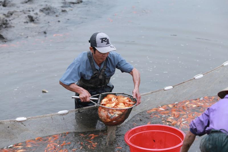 Làng cá chép Thủy Trầm tất bật vào Tết ông Táo Ảnh 2