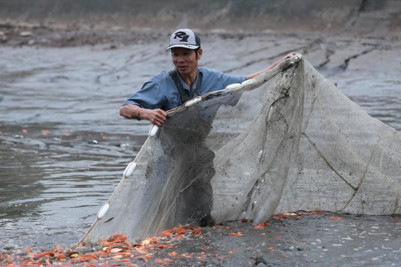 Làng cá chép Thủy Trầm tất bật vào Tết ông Táo Ảnh 1