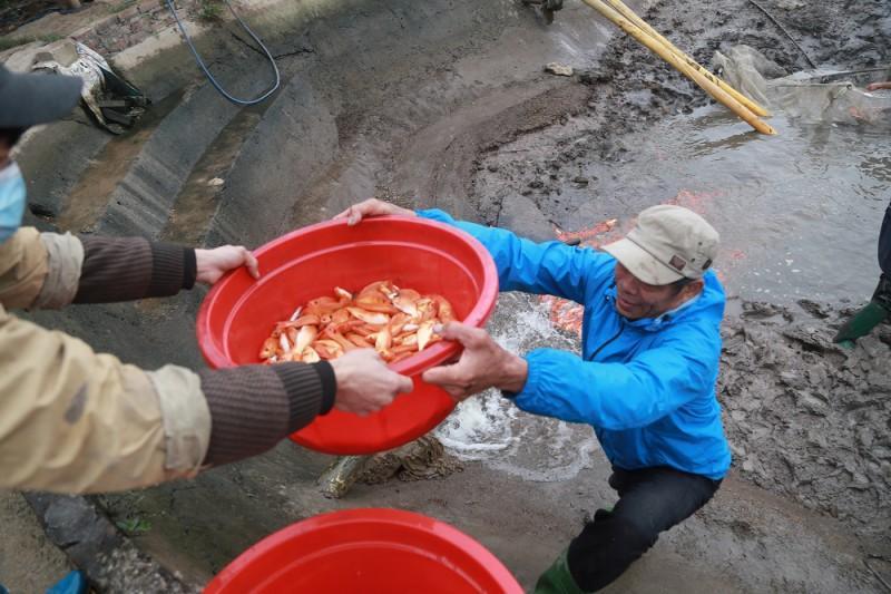 Làng cá chép Thủy Trầm tất bật vào Tết ông Táo Ảnh 5