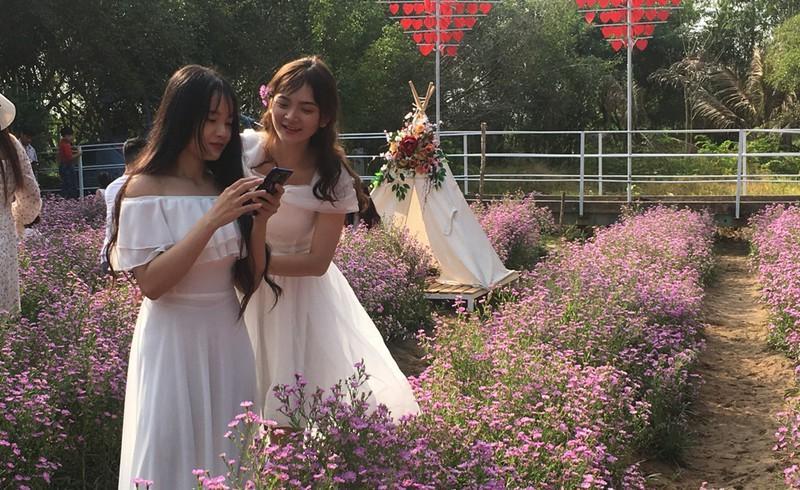 Ùn ùn 'check-in' vườn hoa thạch thảo ở Cần Thơ Ảnh 9