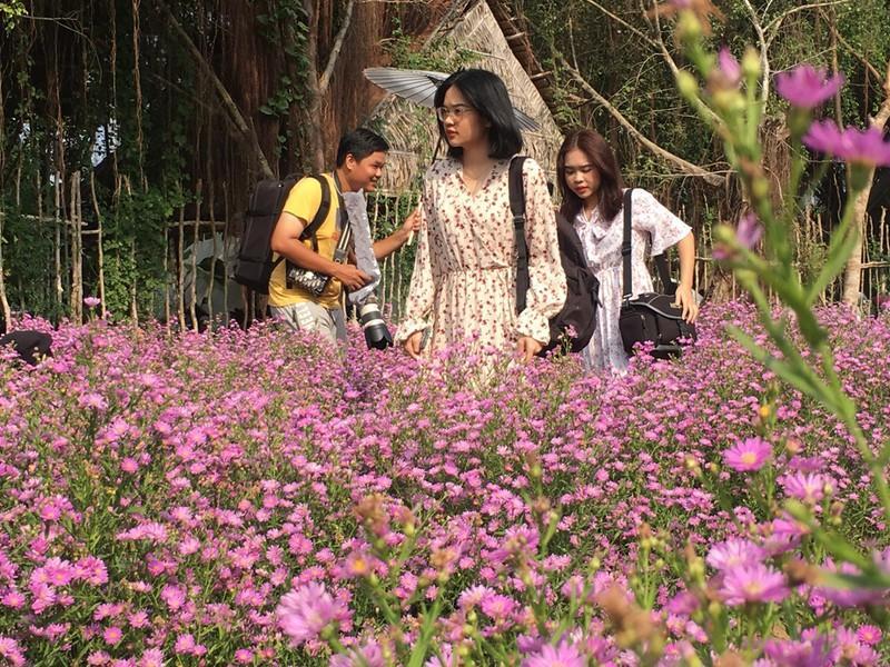 Ùn ùn 'check-in' vườn hoa thạch thảo ở Cần Thơ Ảnh 2