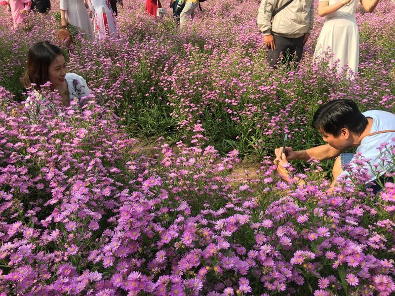 Ùn ùn 'check-in' vườn hoa thạch thảo ở Cần Thơ Ảnh 6