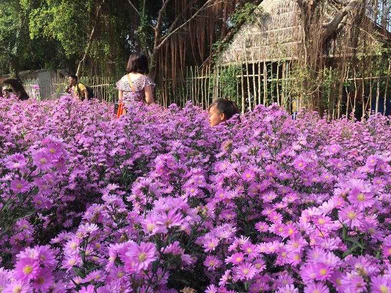 Ùn ùn 'check-in' vườn hoa thạch thảo ở Cần Thơ Ảnh 8