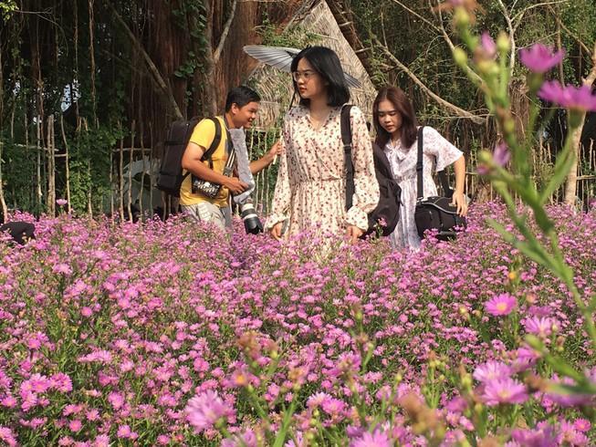 Ùn ùn 'check-in' vườn hoa thạch thảo ở Cần Thơ Ảnh 1