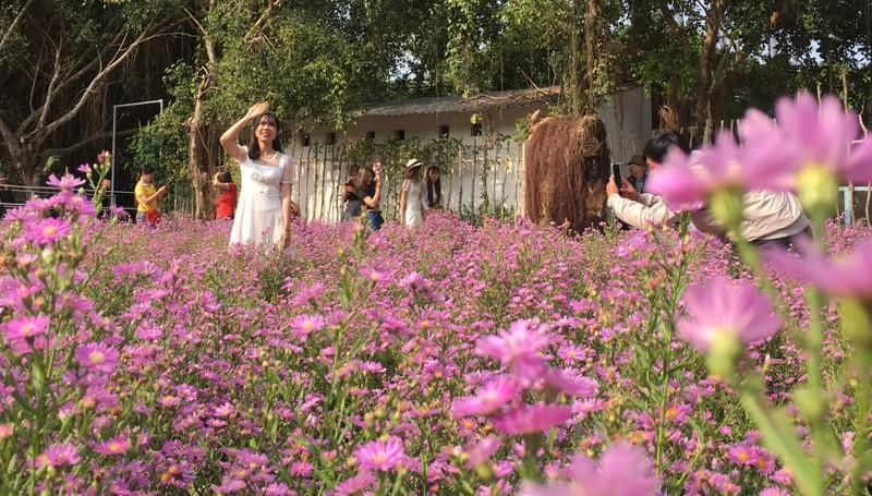 Ùn ùn 'check-in' vườn hoa thạch thảo ở Cần Thơ Ảnh 4