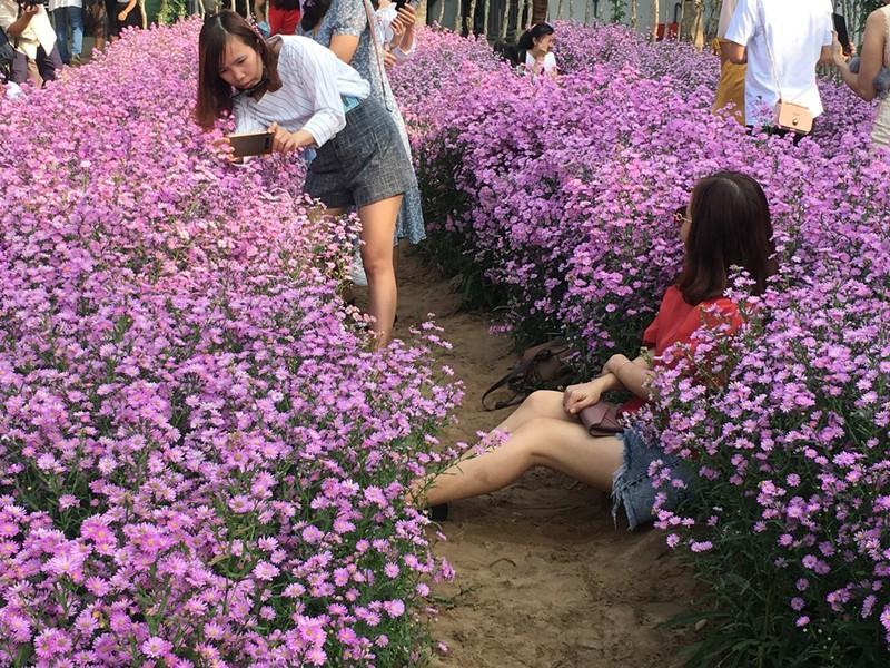 Ùn ùn 'check-in' vườn hoa thạch thảo ở Cần Thơ Ảnh 11