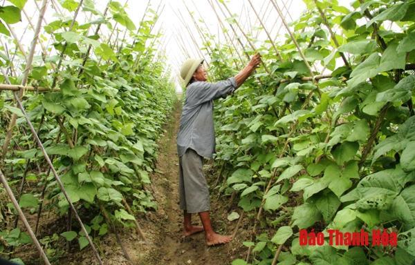 Thúc đẩy liên kết sản xuất gắn với tiêu thụ nông sản Ảnh 1