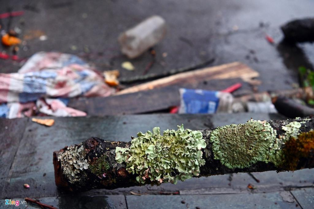 Đào rừng bị vứt bỏ, dân đánh ôtô gom chơi Tết Ảnh 3