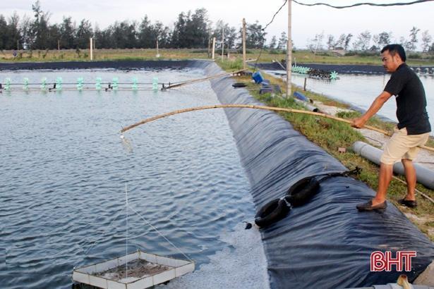 Cảnh giác với dịch bệnh trên tôm nuôi ở Hà Tĩnh trước tiết trời 'đỏng đảnh' Ảnh 3