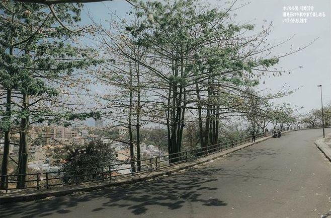 Check-in con đường bông gòn nở trắng ở Vũng Tàu Ảnh 8