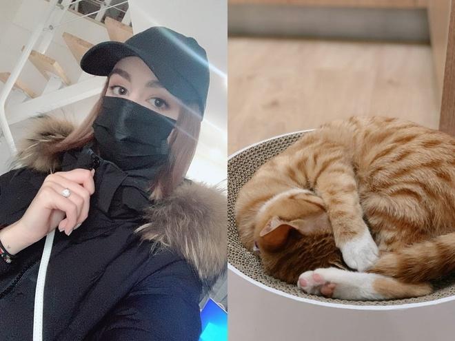 Không muốn bỏ lại mèo cưng, cô gái quyết tâm ở lại tâm dịch Covid-19 Ảnh 1