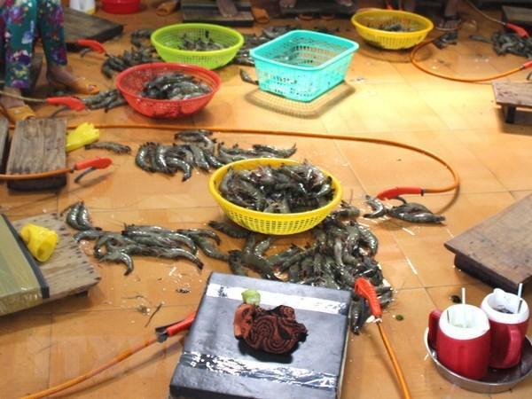 Xử lý 1 đối tượng thu gom 600kg tôm nguyên liệu có chứa tạp chất Ảnh 1