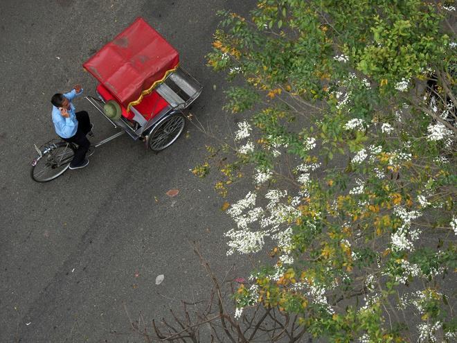 Phố cũ, bao mùa hoa bỏ lại... Ảnh 1
