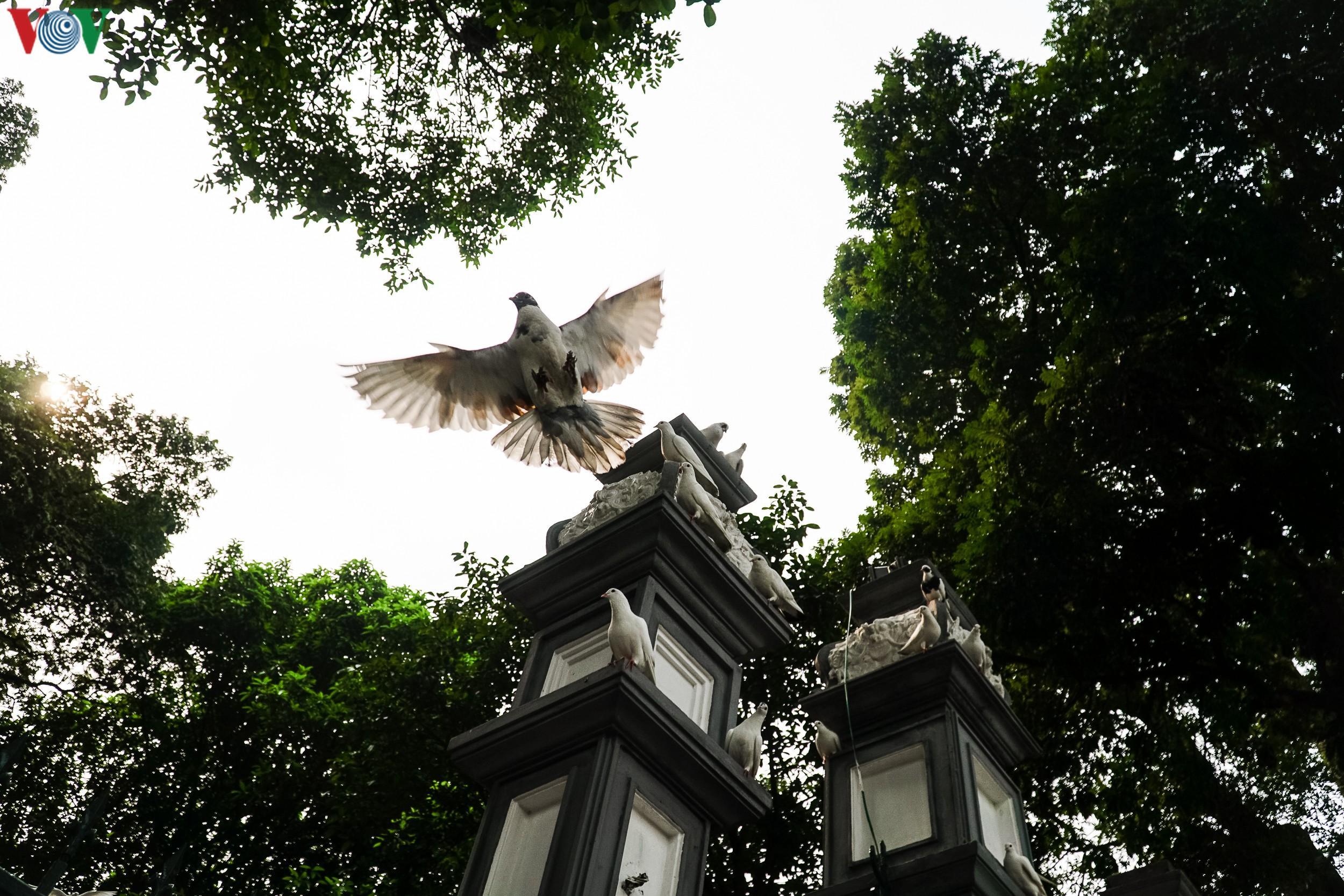Ngắm đàn chim bồ câu bên hồ Hoàn Kiếm Ảnh 12